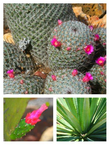Ejemplos de 3 plantas que se encuentran en los arriates.