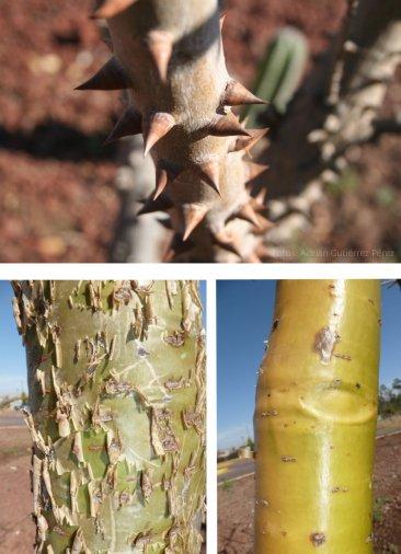 Tres diferentes tipos de corteza presentes en la Glorieta de la selva seca.