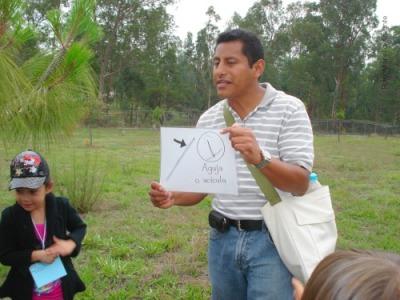 Mostrando una hoja de pino o acícula.