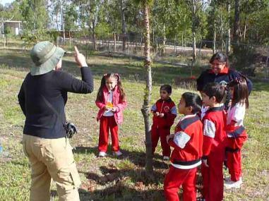 Un grupo de preescolar cantando la canción del pino.