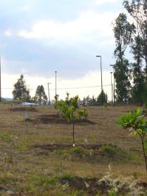 EL arboretum hace algunos años. (Foto: Juan Martínez Cruz)