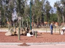 Plantando cactos en la glorieta. (Foto: Juan Martínez Cruz)