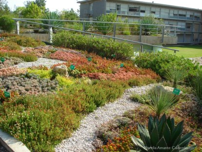 Diversidad vegetal en la azotea verde del Ecojardín-UNAM.