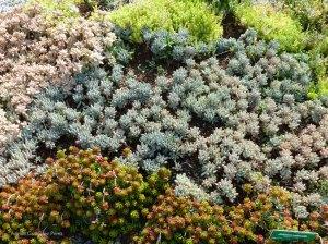 Algunas de las plantas que habitan en la azotea verde.